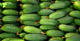 SELL FRESH VEGETABLES FRESH CUCUMBERS, PRICE - CENY ROLNICZE, Agro-Market24
