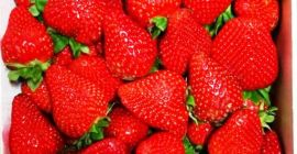 SELL FRESH FRUITS FRESH STRAWBERRIES, PRICE - INTERNATIONAL AGRICULTURAL EXCHANGE, Agro-Market24