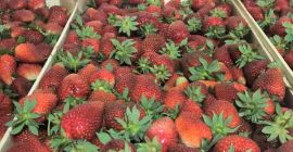 SELL DRIED FRUITS FRESH STRAWBERRIES, PRICE - AGRICULTURAL ADVERTISEMENTS, Agro-Market24