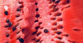 SELL FRESH FRUITS FRESH WATERMELONS, PRICE - AGRICULTURAL EXCHANGE, Agro-Market24