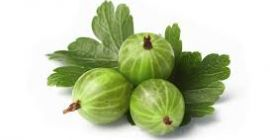 SELL FROZEN FRUITS FRESH GOOSEBERRY HINNONMAKI ROT, PRICE - CENY ROLNICZE, Agro-Market24