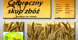 BUY FRESH CEREALS  CEREALS  TRITICALE, PRICE - CENY ROLNICZE, Agro-Market24
