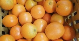 We sell Fresh quality ORANGES contact us directly via email for more details. Email ( sales@visolgor-srl.com )