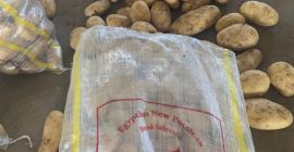 We are selling first class potatoes from Egypt with various quantities in different packaging in 40 feet Container of 25 tons capacity. Please feel free to contact me for more information about potatoes and other fresh and frozen wide range products such as but not limited to, Onion, Garlic, Broccoli, Green Pea, Carrot, Potatoes, Pomegranate, Strawberries, Mango, and Guava. My Email is mohamed.elwardany@kbmegy.com