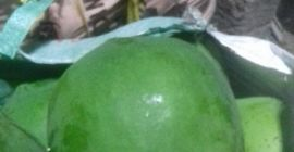 I want to selling fresh papaya from INDIA. contact me serious buyer only...,.