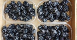 SELL FRESH FRUITS FRESH BLACKBERRIES, PRICE - INTERNATIONAL AGRICULTURAL EXCHANGE, Agro-Market24