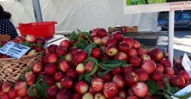 SELL FRESH FRUITS FRESH NECTARINES, PRICE - AGRICULTURAL ADVERTISEMENTS, Agro-Market24