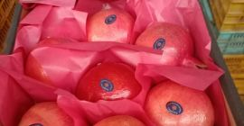 SELL FRESH FRUITS FRESH POMEGRANATE, PRICE - INTERNATIONAL AGRICULTURAL EXCHANGE, Agro-Market24