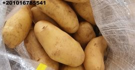 SELL FROZEN POTATOES FRESH POTATOES, PRICE - AGRICULTURAL EXCHANGE, Agro-Market24