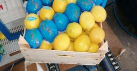 SELL FRESH FRUITS FRESH LEMONS, PRICE - INTERNATIONAL AGRICULTURAL EXCHANGE, Agro-Market24
