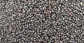 SELL FRESH FRUITS FRESH BERRY, PRICE - AGRICULTURAL ADVERTISEMENTS, Agro-Market24