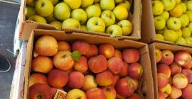 SELL FRESH FRUITS FRESH APPLES, PRICE - INTERNATIONAL AGRICULTURAL EXCHANGE, Agro-Market24