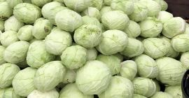 SELL FRESH VEGETABLES FRESH CABBAGE, PRICE - AGRICULTURAL EXCHANGE, Agro-Market24