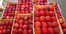 SELL FRESH FRUITS FRESH APPLES IDARED, PRICE - CENY ROLNICZE, Agro-Market24