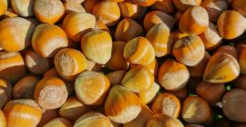 SELL FRESH FRUITS FRESH NUTS HAZELNUTS, PRICE - INTERNATIONAL AGRICULTURAL EXCHANGE, Agro-Market24