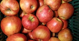 SELL FRESH FRUITS FRESH APPLES JONAGORED, PRICE - AGRICULTURAL ADVERTISEMENTS, Agro-Market24