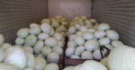 SELL FROZEN VEGETABLES FRESH CABBAGE, PRICE - CENY ROLNICZE, Agro-Market24