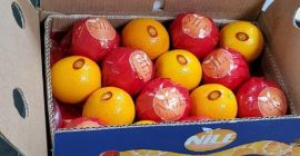 Fresh  Navel Oranges for sale from egypt  