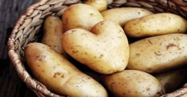 SELL FRESH POTATOES FRESH POTATOES, PRICE - AGRICULTURAL EXCHANGE, Agro-Market24