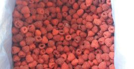 SELL INDUSTRIAL FRUITS FRESH RASPBERRIES, PRICE - AGRICULTURAL ADVERTISEMENTS, Agro-Market24