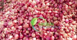 This an organic onion in Somalia. It has pure, healthy and well packated. I can get as much as ur demant, i am asking for whole sellers.