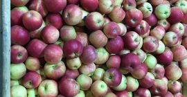 SELL FRESH FRUITS FRESH APPLES IDARED, PRICE - AGRICULTURAL ADVERTISEMENTS, Agro-Market24