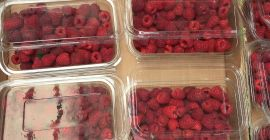 SELL FROZEN FRUITS FRESH RASPBERRIES, PRICE - AGRICULTURAL ADVERTISEMENTS, Agro-Market24