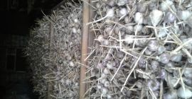SELL DRIED VEGETABLES FRESH GARLIC, PRICE - AGRICULTURAL EXCHANGE, Agro-Market24