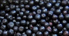 SELL FROZEN FRUITS FRESH CHOKEBERRY, PRICE - AGRICULTURAL EXCHANGE, Agro-Market24