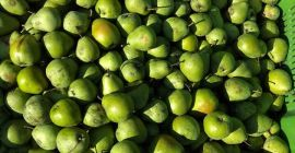 SELL FRESH FRUITS FRESH PEAR LUKAS, PRICE - AGRICULTURAL ADVERTISEMENTS, Agro-Market24
