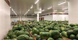 SELL FRESH FRUITS FRESH WATERMELONS, PRICE - CENY ROLNICZE, Agro-Market24