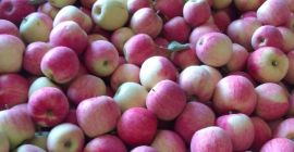 SELL FRESH FRUITS FRESH APPLES PAULARED, PRICE - AGRICULTURAL ADVERTISEMENTS, Agro-Market24
