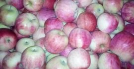 SELL FRESH FRUITS FRESH APPLES PAULARED, PRICE - AGRICULTURAL EXCHANGE, Agro-Market24