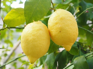 lemon price