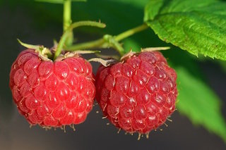 raspberries price