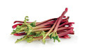SELL FRESH VEGETABLES FRESH RHUBARB, PRICE - AGRICULTURAL ADVERTISEMENTS, Agro-Market24
