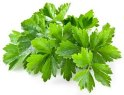 BUY FRESH HERBS  HERBS CORIANDER, PRICE - INTERNATIONAL AGRICULTURAL EXCHANGE, Agro-Market24