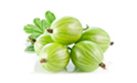 SELL FRESH FRUITS FRESH GOOSEBERRY BIAŁY TRIUMF, PRICE - AGRICULTURAL EXCHANGE, Agro-Market24