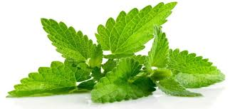 SELL FRESH HERBS  HERBS MINT, PRICE - AGRICULTURAL EXCHANGE, Agro-Market24