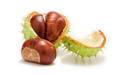 SELL FRESH FRUITS FRESH CHESTNUTS, PRICE - AGRICULTURAL ADVERTISEMENTS, Agro-Market24