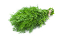 SELL FROZEN HERBS  HERBS DILL, PRICE - AGRICULTURAL ADVERTISEMENTS, Agro-Market24