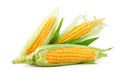 SELL INDUSTRIAL CEREALS  CEREALS  MAIZE , PRICE - AGRICULTURAL ADVERTISEMENTS, Agro-Market24
