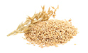 SELLING FRESH CEREALS  CEREALS  OAT, PRICE - AGRICULTURAL ADVERTISEMENTS, Agro-Market24