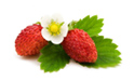 SELL FRESH FRUITS FRESH WILD STRAWBERRIES, PRICE - AGRICULTURAL EXCHANGE, Agro-Market24