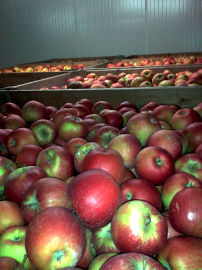 buty skate różnie kup tanio apples champion